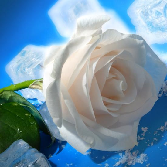 rose-04-1.jpg